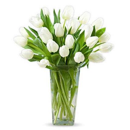 20 زهرة توليب بيضاء