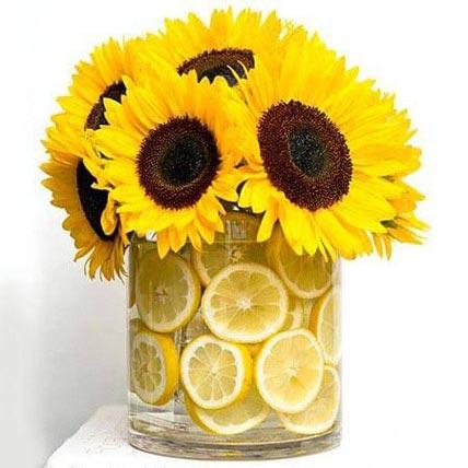 زهور الشمس المشرقة